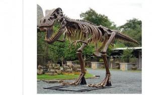 T-Rex Skelett + jetztbinichpleite.de